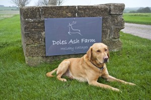 dog friendly cottages dorset