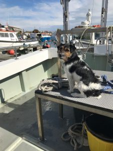 dog friendly holidays dorset