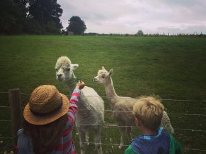 Dorset Farm Holidays