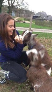 Doles Ash Farmhouse, Dolly the pgmy Goat